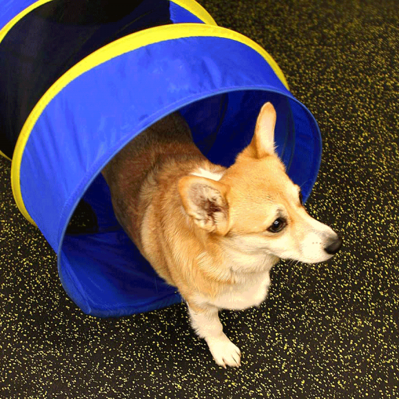 Example of pet day care in Atlanta