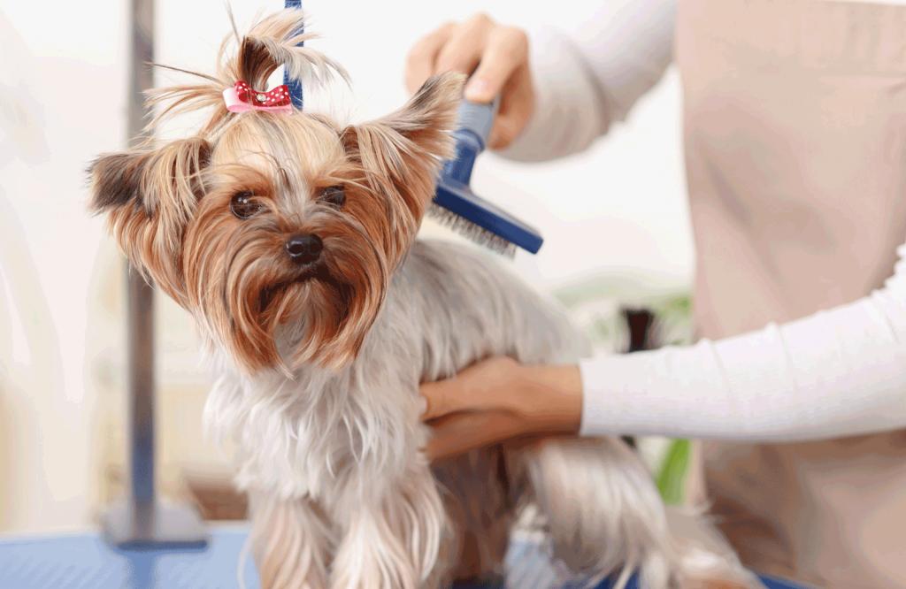 Example of pet grooming in Atlanta