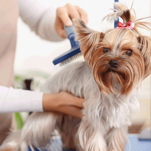 Example of pet grooming in Atlanta