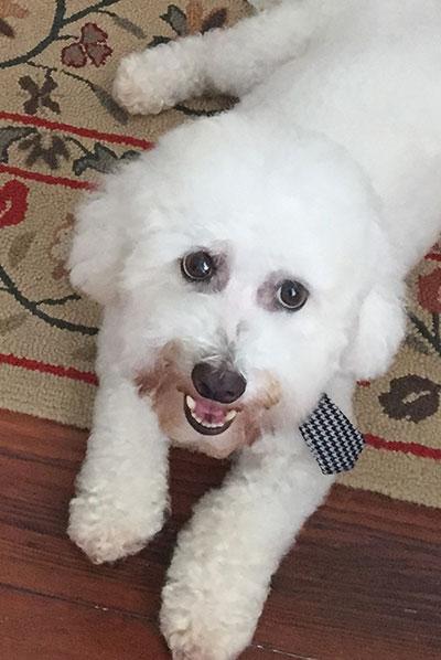 Duke - Dog Grooming