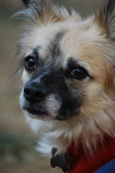 Ginger - Dog Daycare