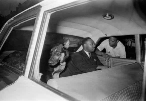 Martin Luther King with German Shepherd dog