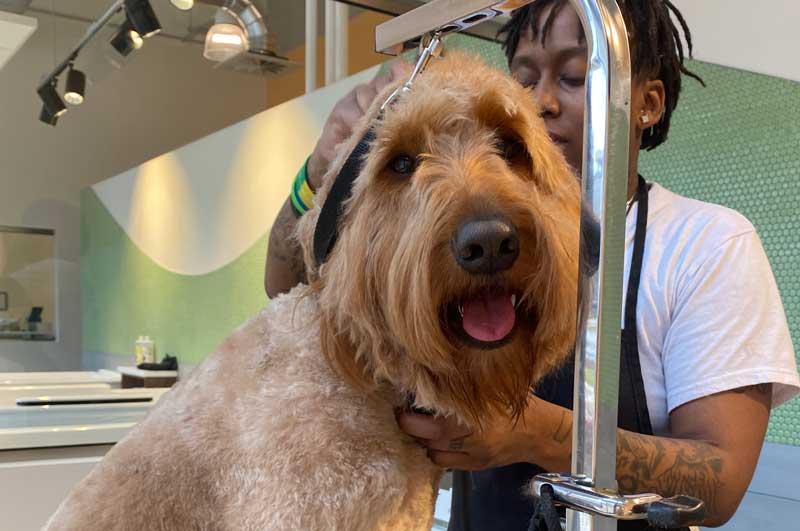 Pet Grooming in Atlanta