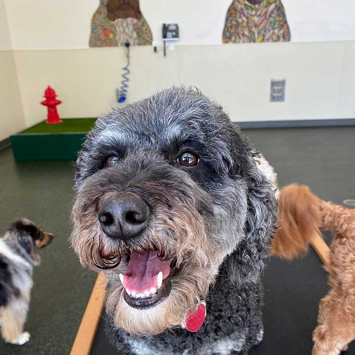 Dog Daycare in Atlanta GA
