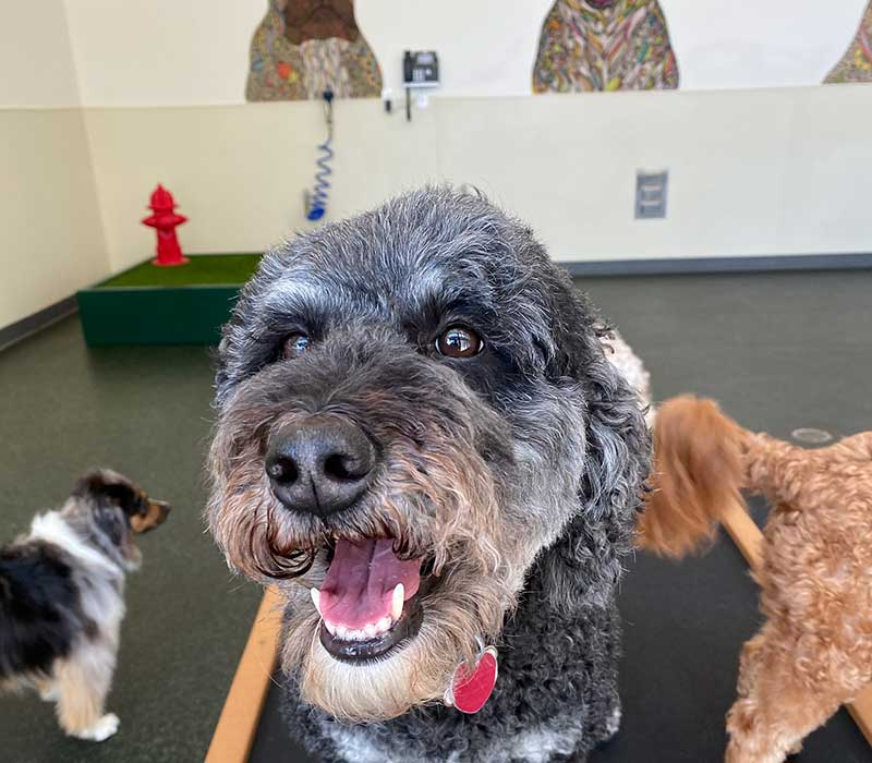 Dog Daycare in Atlanta GA