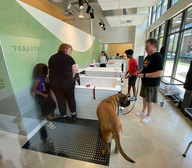 Pet Boarding in Atlanta GA