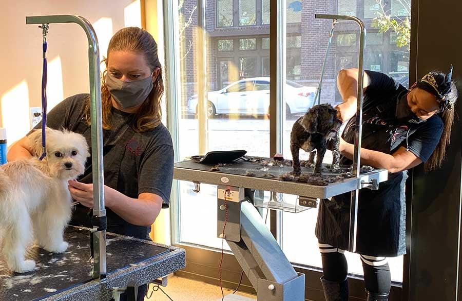 Grooming Spa for Pet Grooming in Atlanta, Georgia